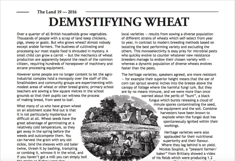 demystifing-wheat