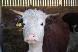 Grown in Totnes on a visit to John Crisp's farm