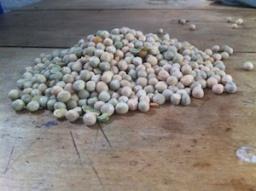 Dartington Estate grown peas.