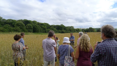 In the field of Heritage Wheat Population with an impromptu talk by archaeobotonist and grain breeder John Letts.
